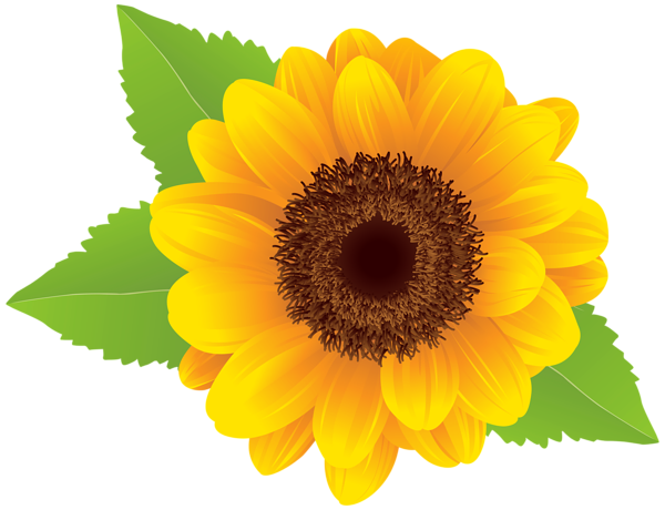 sunflower png clip art image gallery yopriceville high #17268