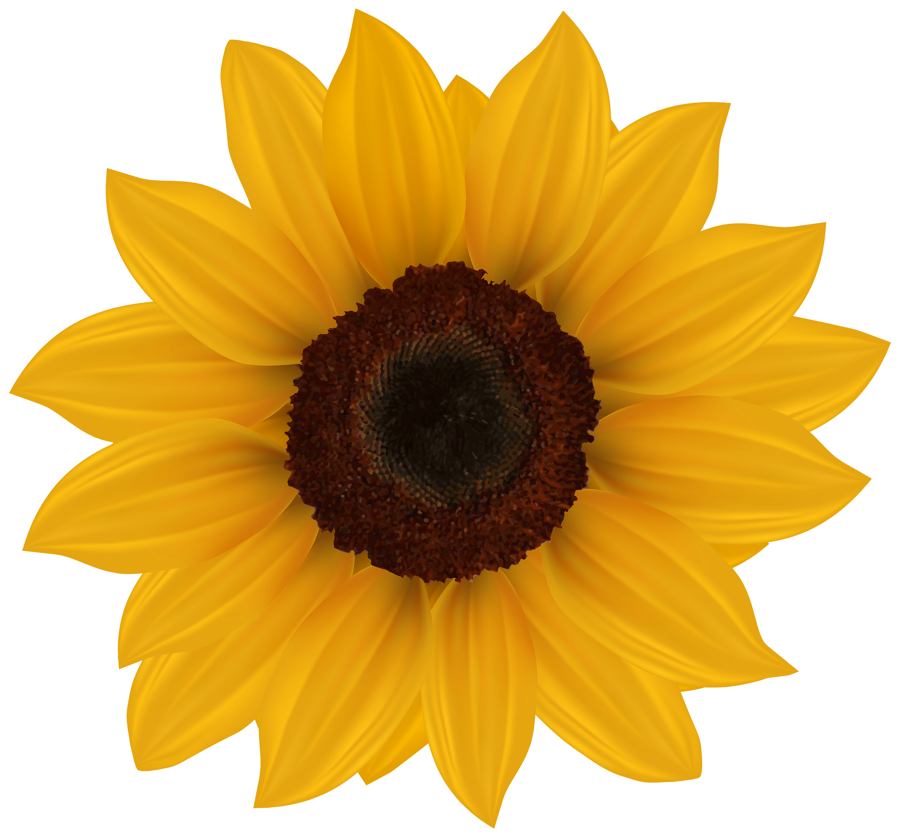 sunflower png clipart image best web clipart #17188
