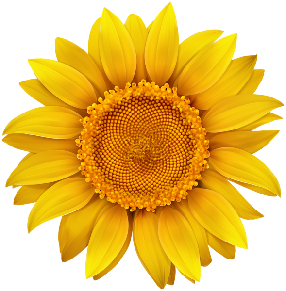 sunflower png image gallery yopriceville high quality #17267