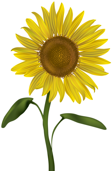 sunflower transparent png clip art image gallery #17269