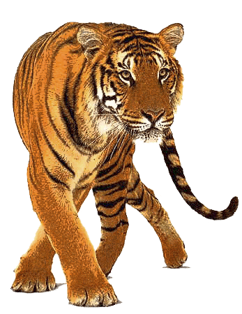 download tiger png image download tigers png image #14718