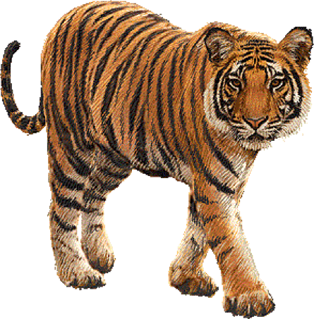 tiger, can wildlife tourism help conserve our endangered species #14746