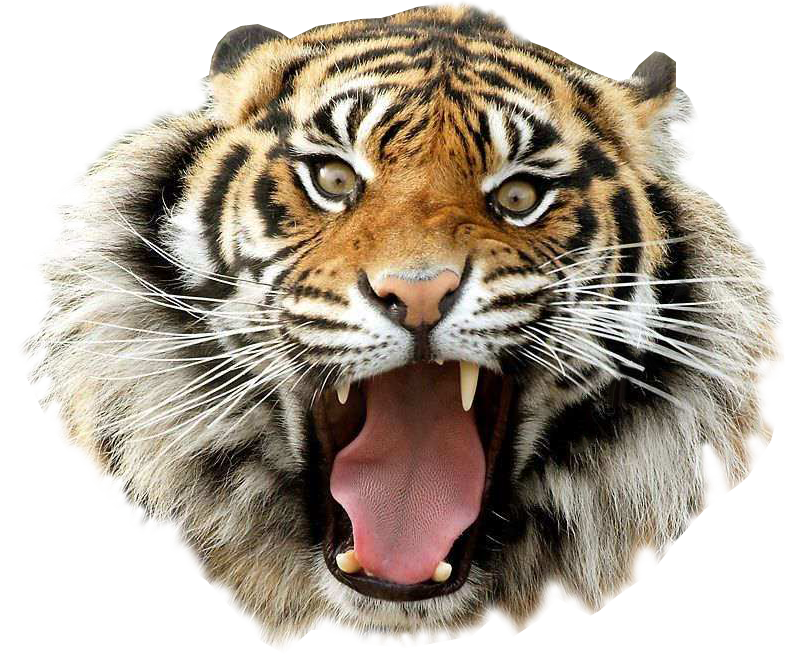 tiger, gallery png images #14700