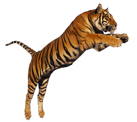 tiger png images the deadly asian cat png only 14751