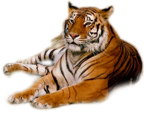 tiger png web icons png 14755
