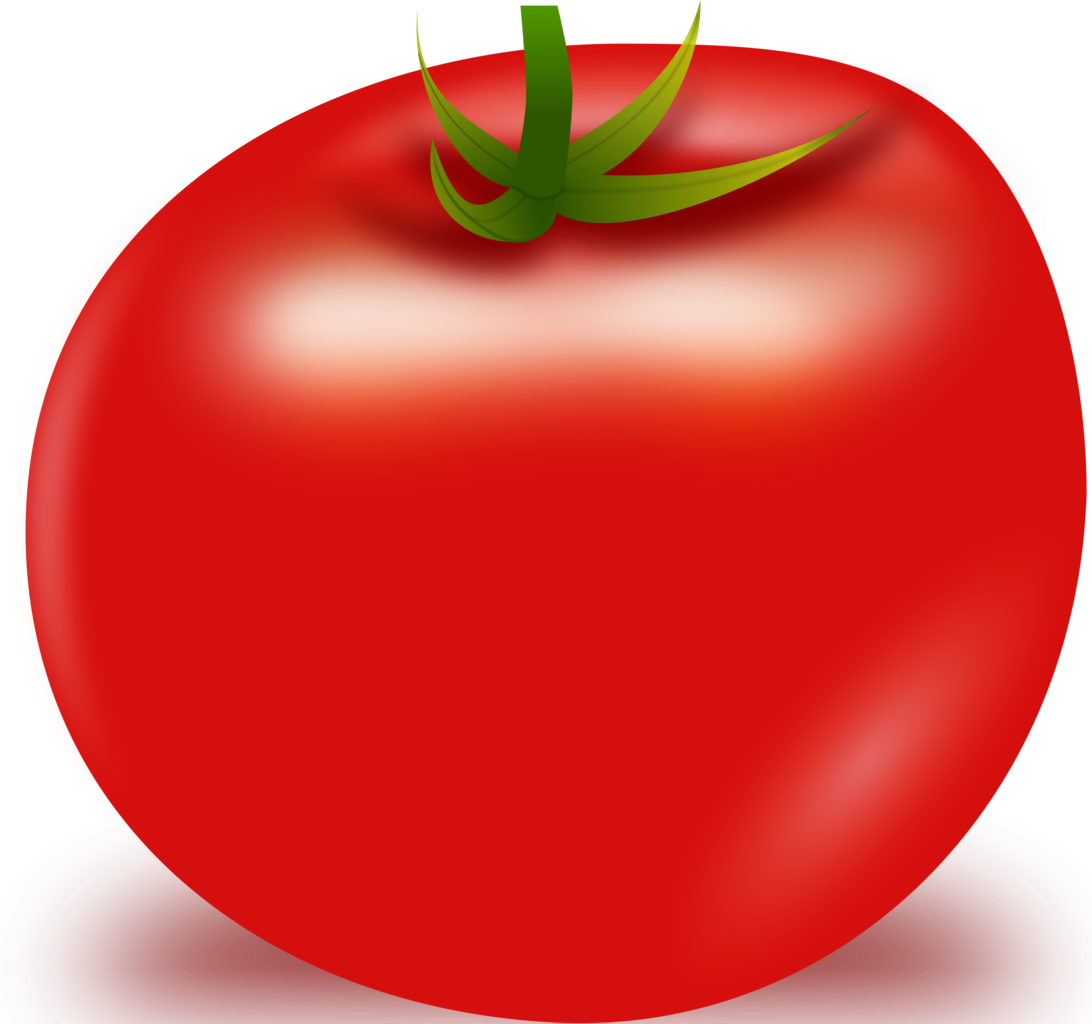 download tomato vector png image pngimg #15556