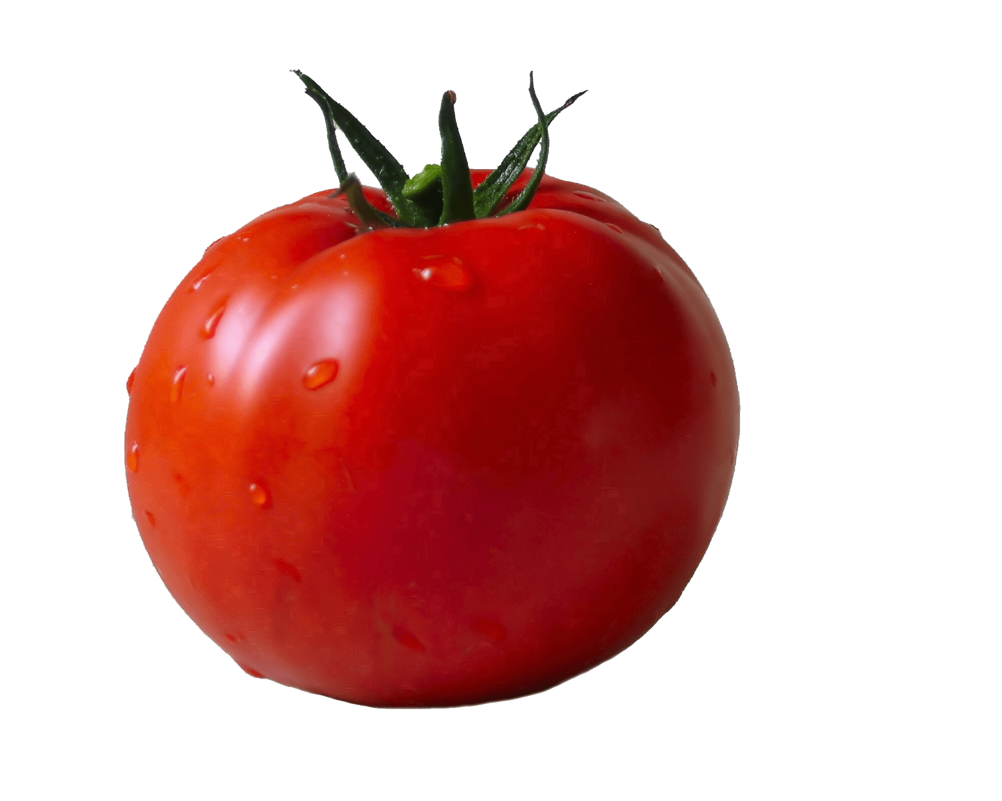 tomato transparent png stickpng #15563
