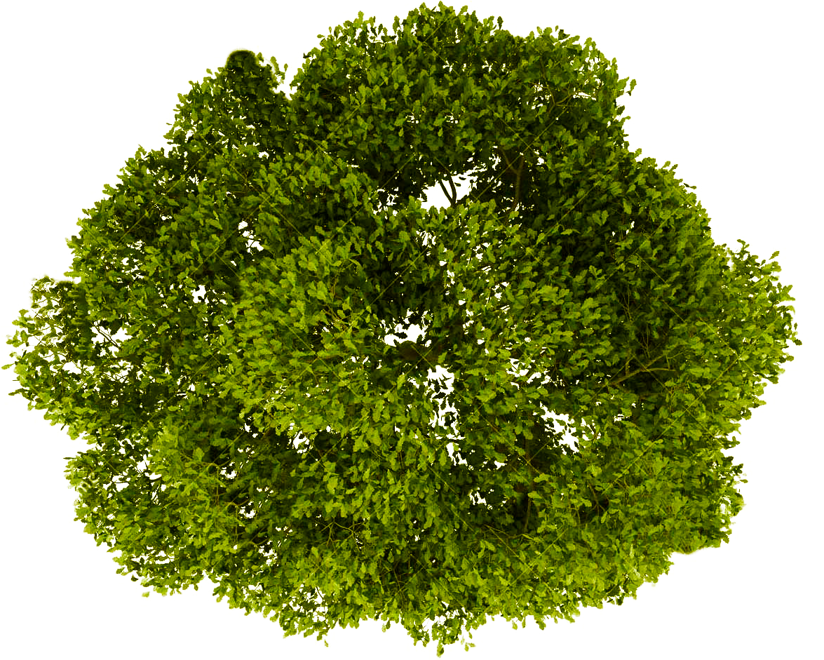 tree plan png top view trees clipart transparent free download free transparent png logos tree plan png top view trees clipart