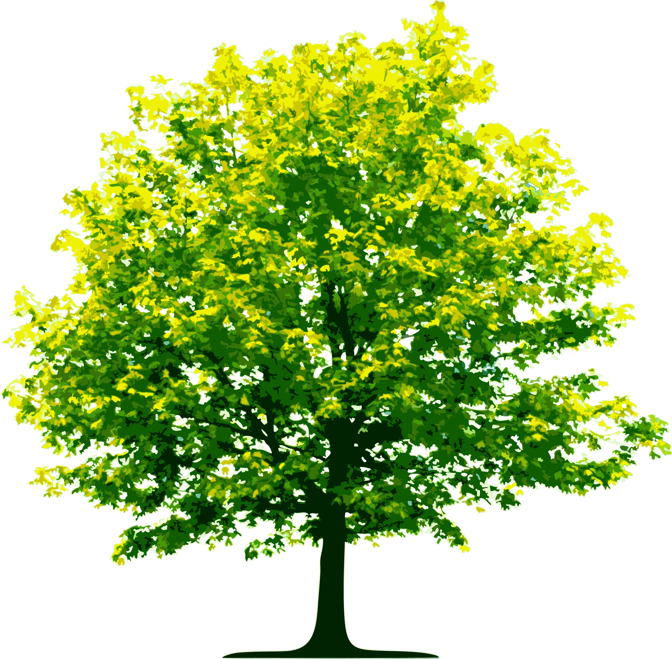 tree plan, top tree transparent png pictures icons and png #27865
