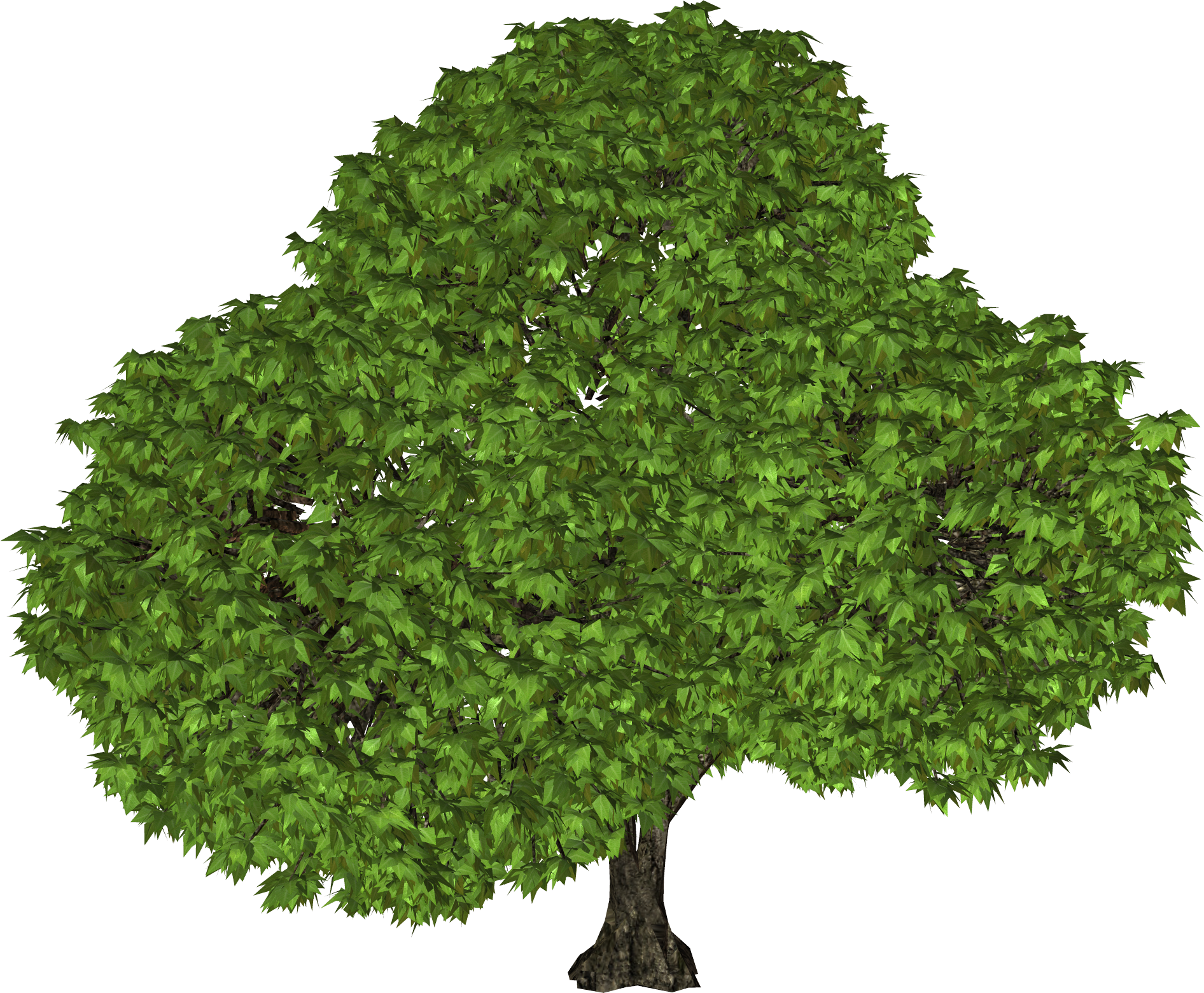clipart tree images pictures download #8251