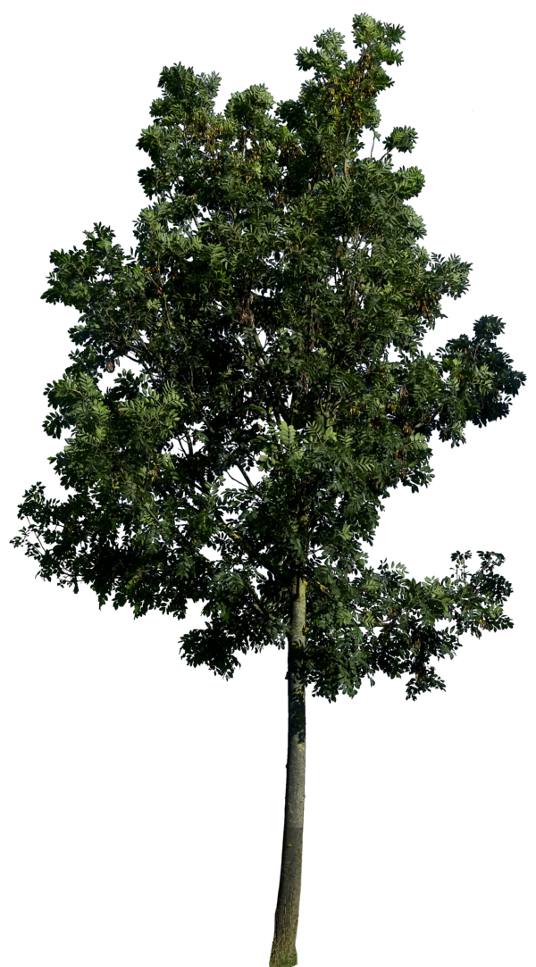dark green tree images backgrounds #8244