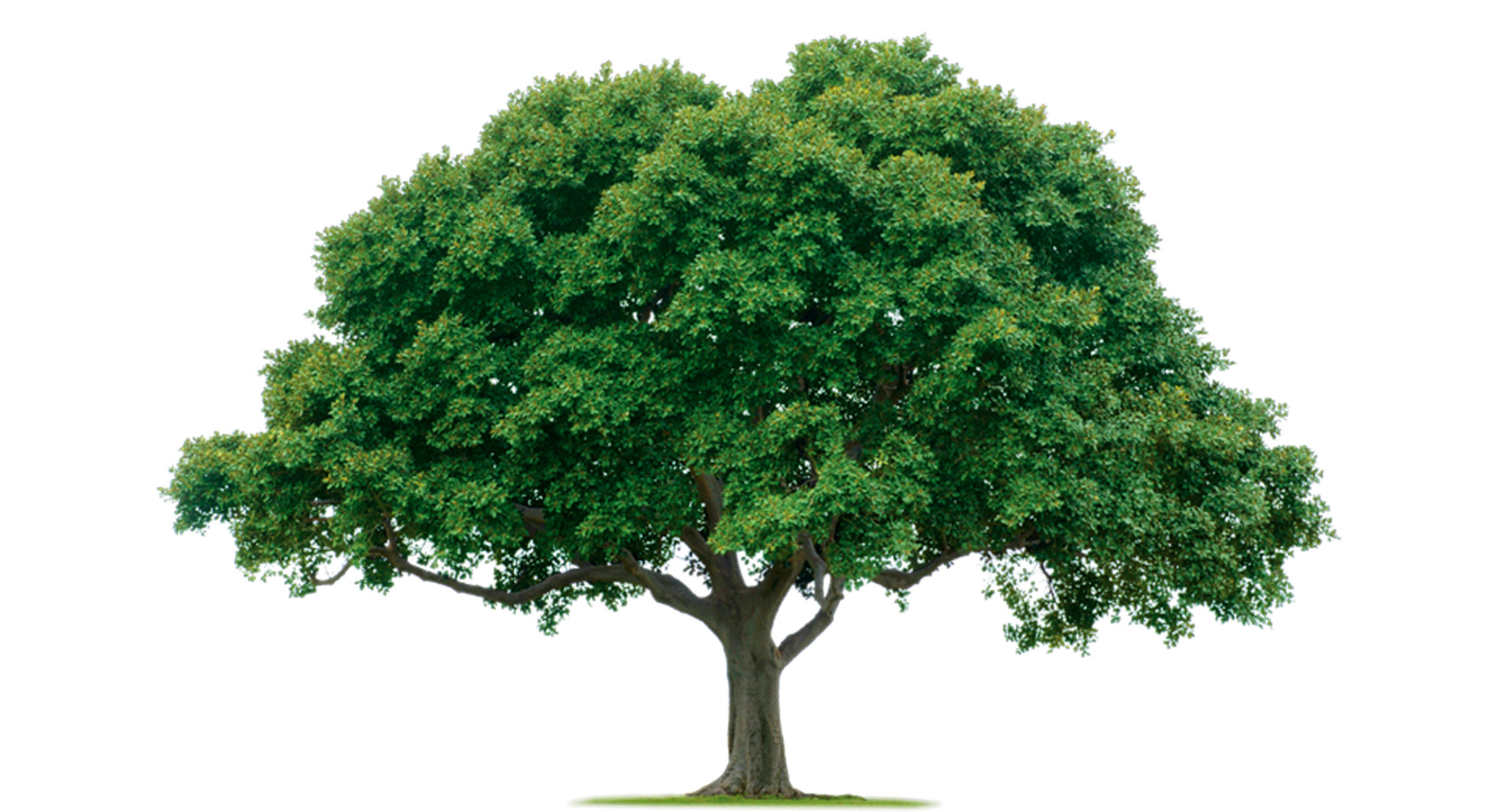 home tree images vector clip #8269