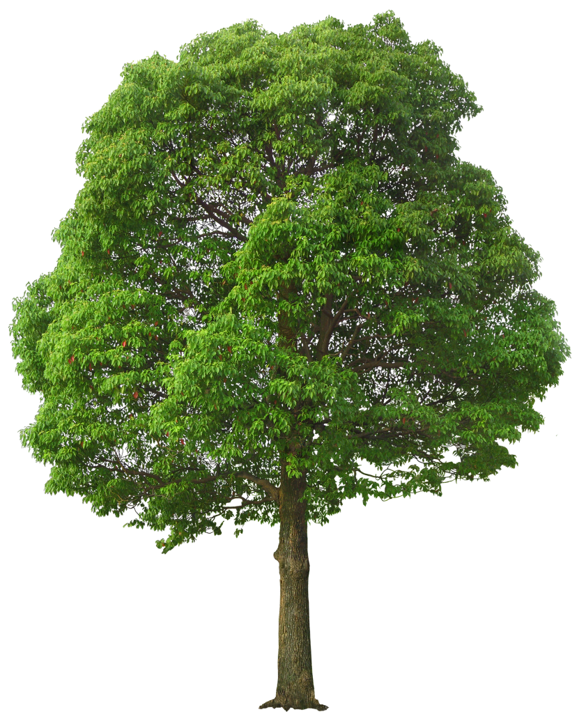 PNG Tree Images, Small, Leaf, Cartoon Trees - Free
