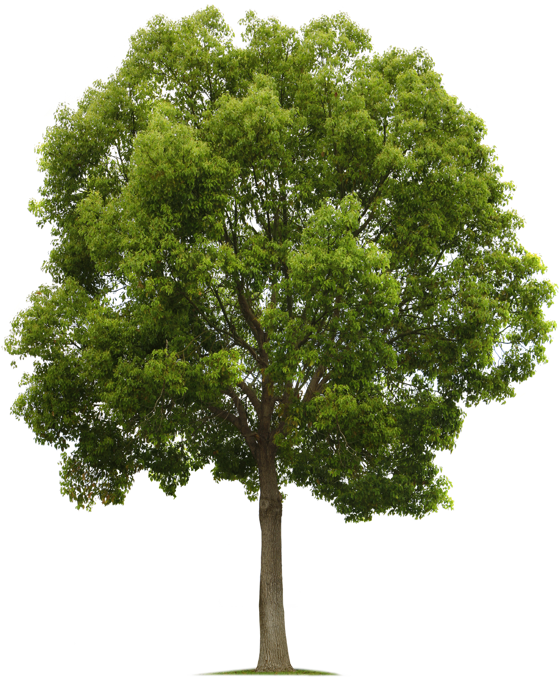Tree Png Images Small Leaf Cartoon Trees Background Free Transparent Png Logos Cartoon tree png cliparts, all these png images has no background, free & unlimited downloads. tree png images small leaf cartoon