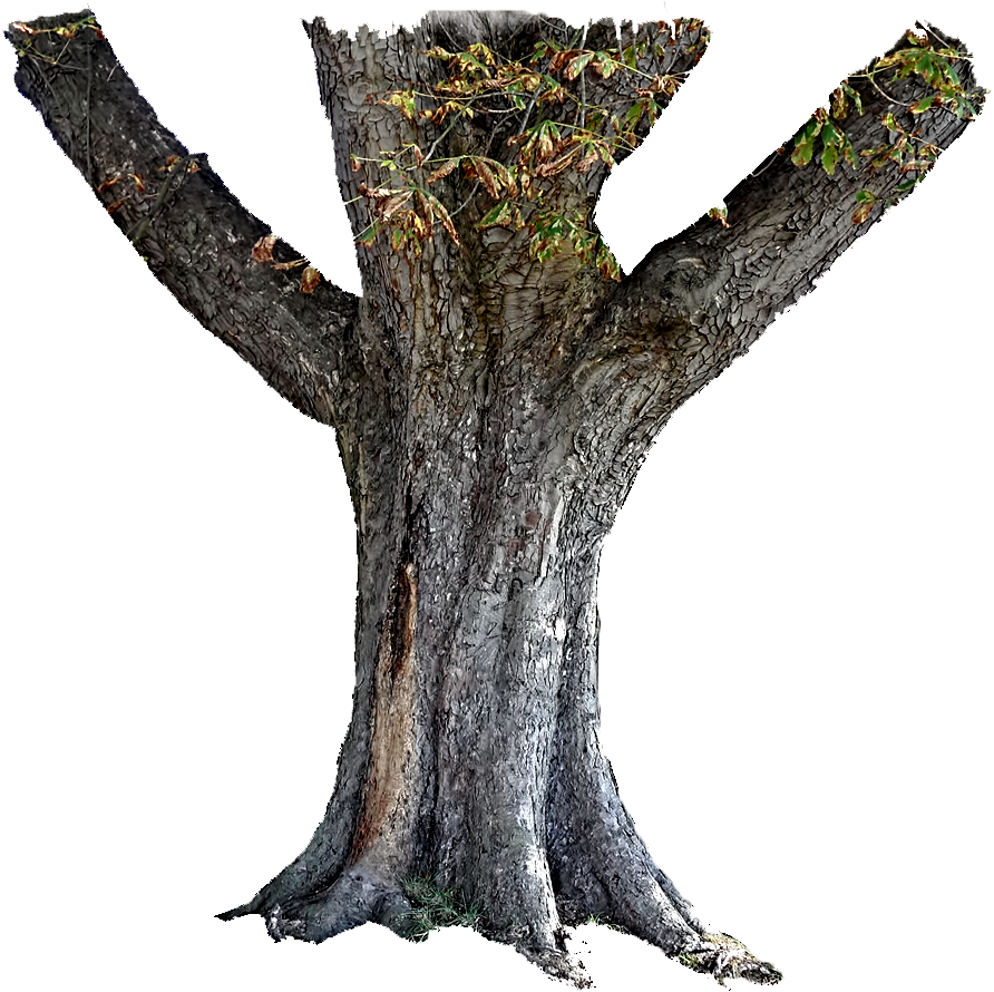 tree trunk png flickr photo sharing #36166
