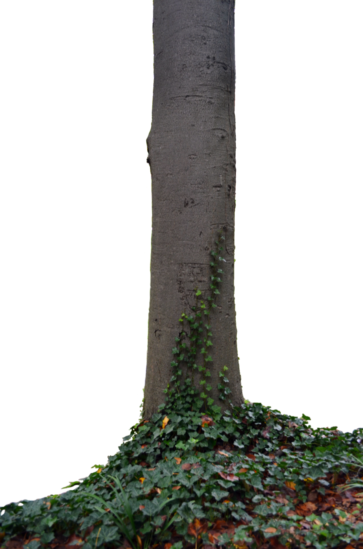 tree trunk with ivy photo tall dsc png #36162