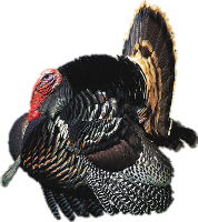 turkey tux paint stamp browser animals #36181