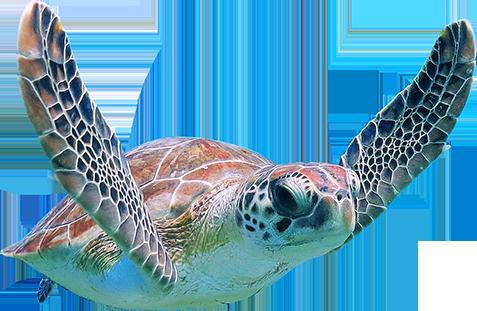 Turtle Png Free Download Images Turtles Sea Turtle Cute Cartoon