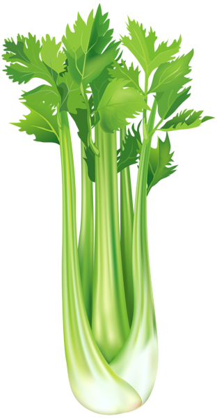 vegetables, celery png clip art image gallery yopriceville #15454