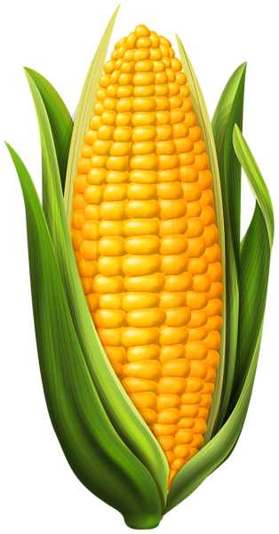 vegetables, corn png clip art image gallery yopriceville high #15421