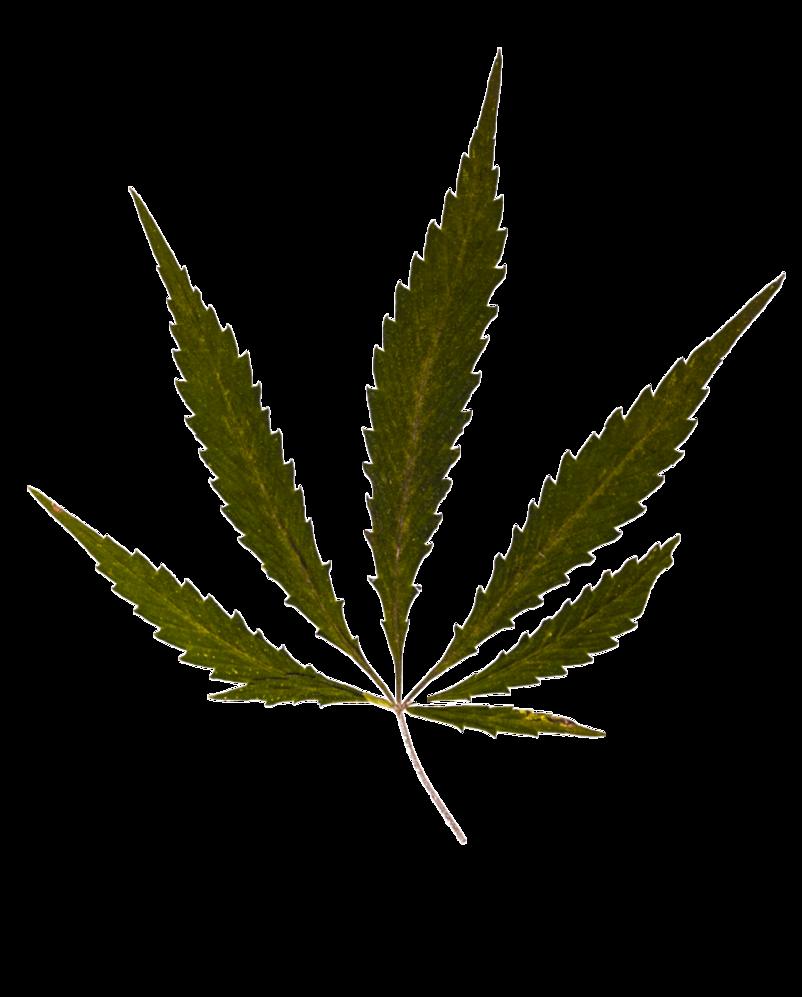 Weed Leaf Transparent Png Cannabis Leaves Black Weed Leaf Clipart Free Transparent Png Logos