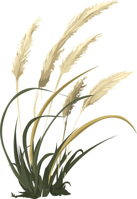 wheat grass agriculture vector graphic pixabay #16652