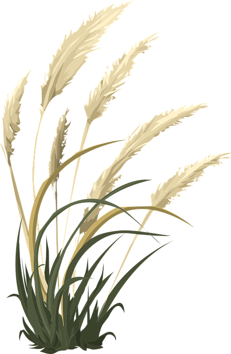 wheat grass nature vector graphic pixabay #16598