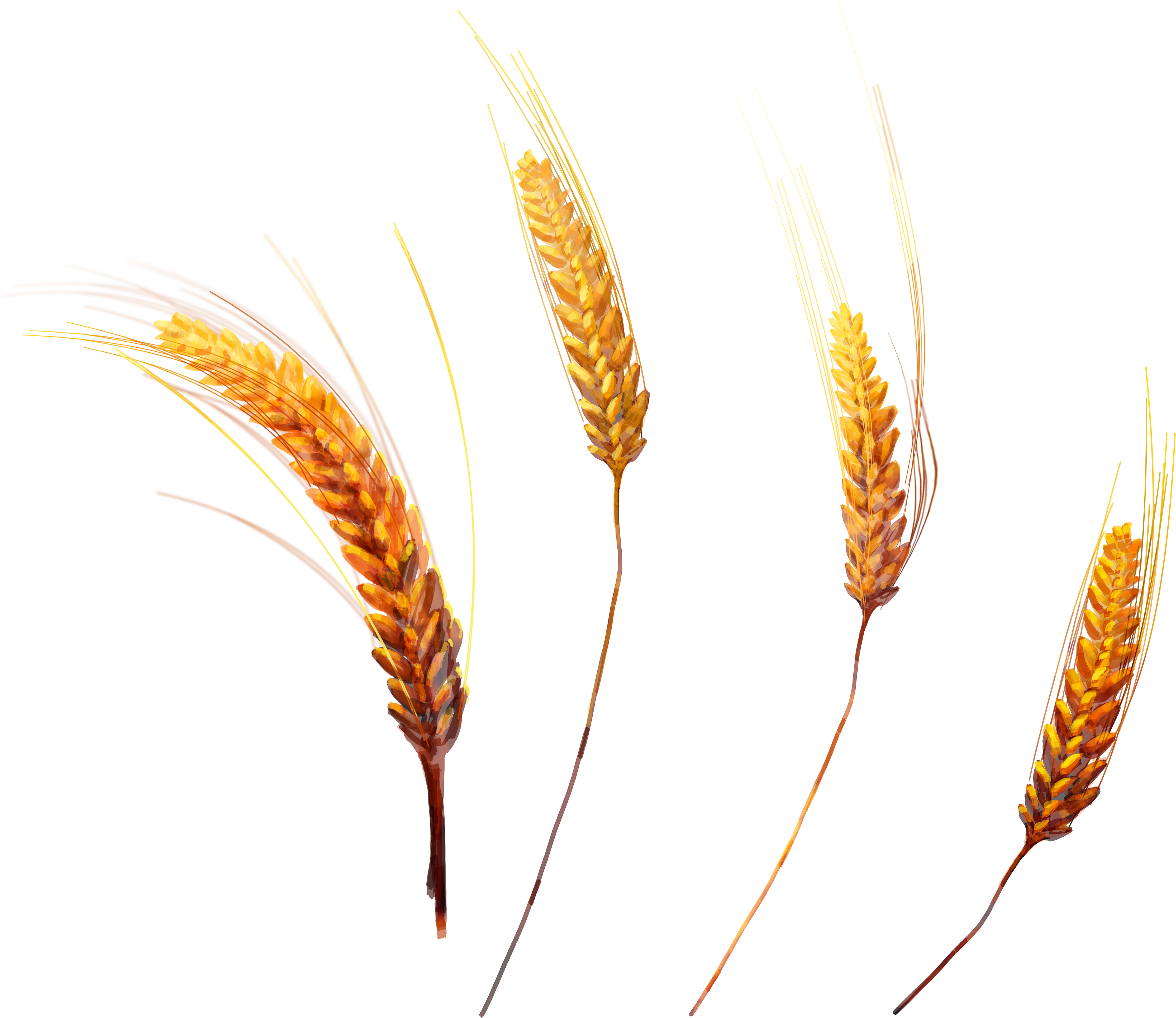 wheat transparent png pictures icons and png #16626