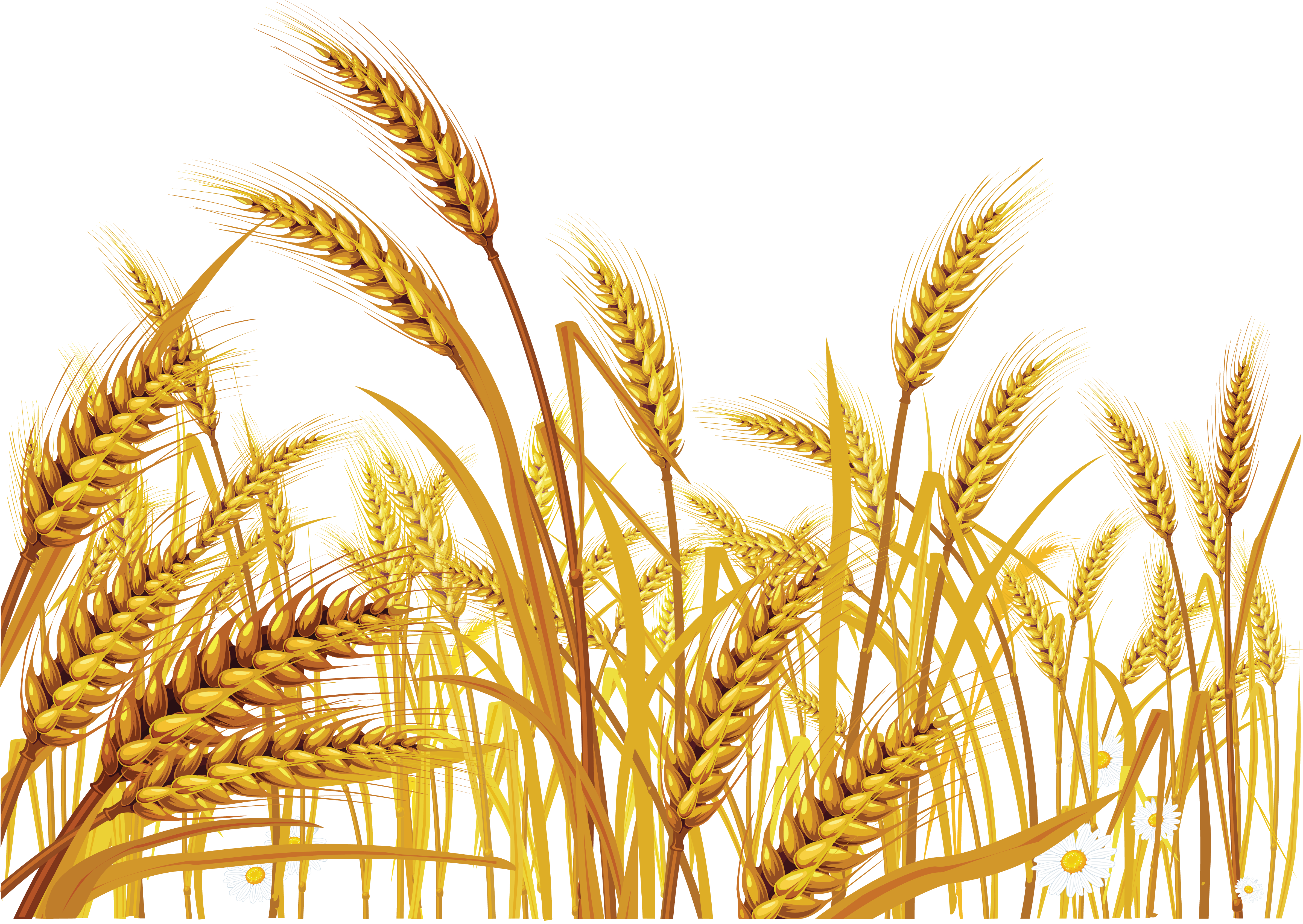 wheat transparent png pictures icons and png #16606