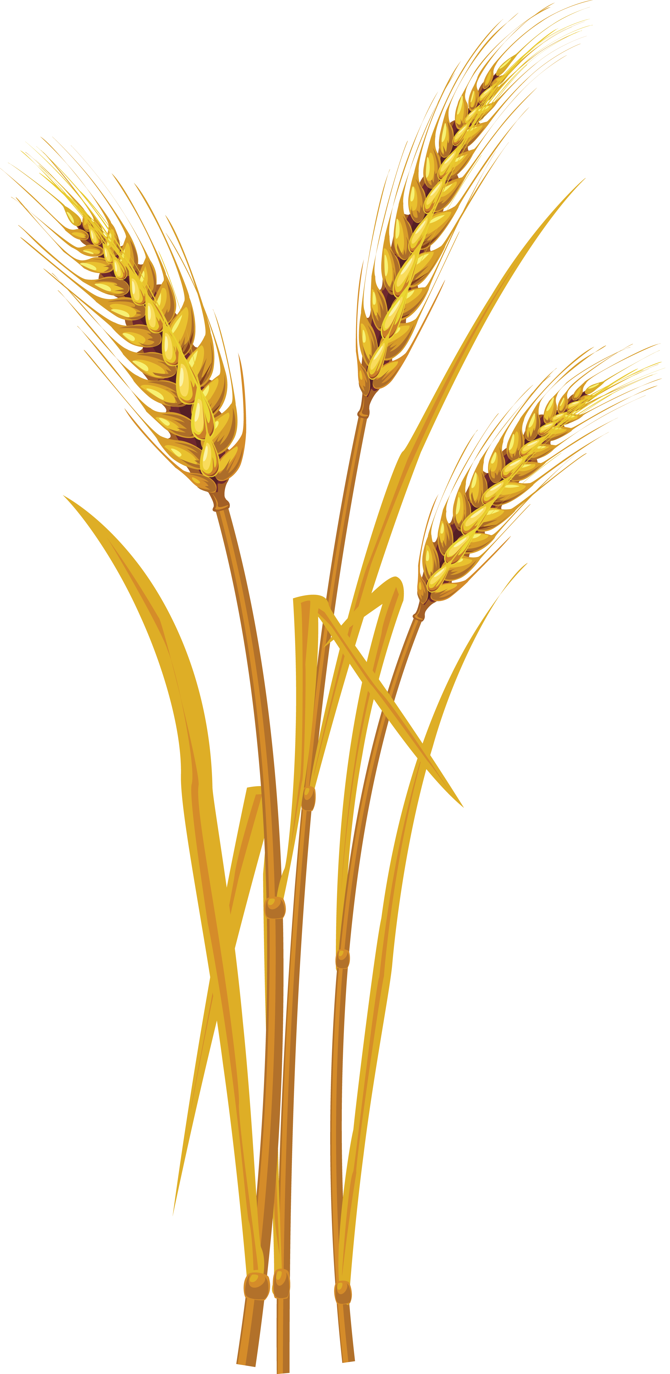 wheat transparent png pictures icons and png #16611