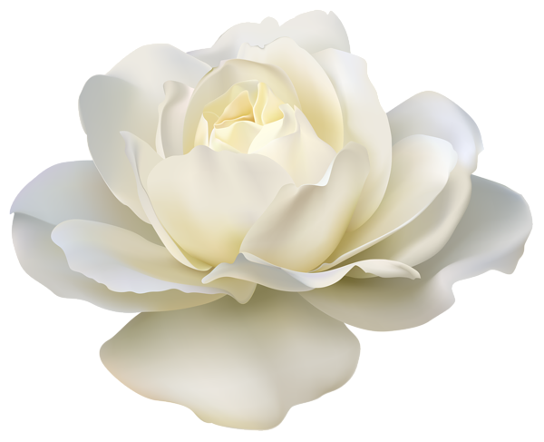 beautiful white rose png image gallery yopriceville #19031