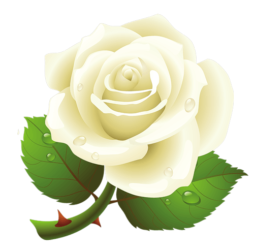 download white rose png image flower white rose png #19027
