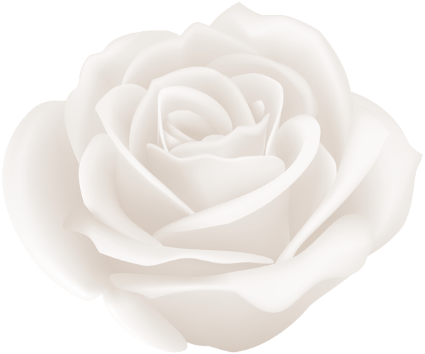 white rose clip art image gallery yopriceville high #19020