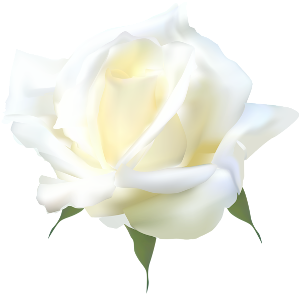 white rose png clip art gallery yopriceville high #19019