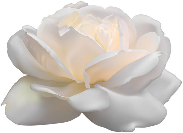 white rose png clip art image gallery yopriceville #19058