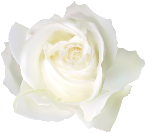 white rose png clip art image gallery yopriceville #19022