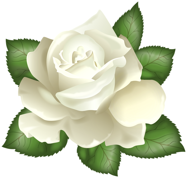 white rose transparent png clip art picture roses #19021