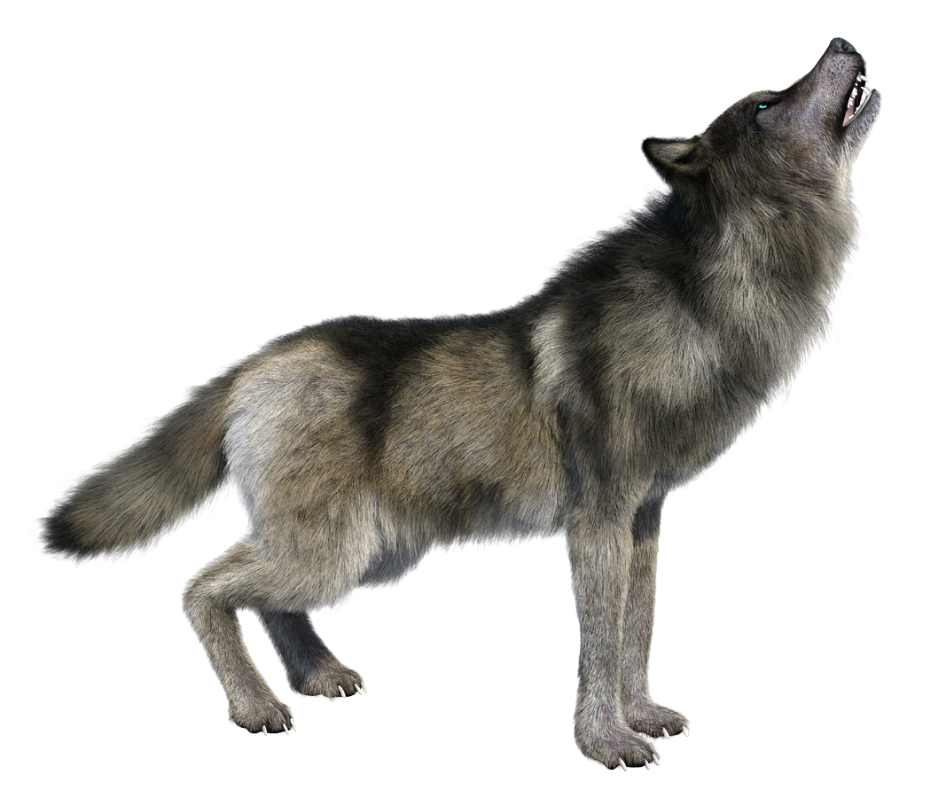 howling wolf png image transparent #19433