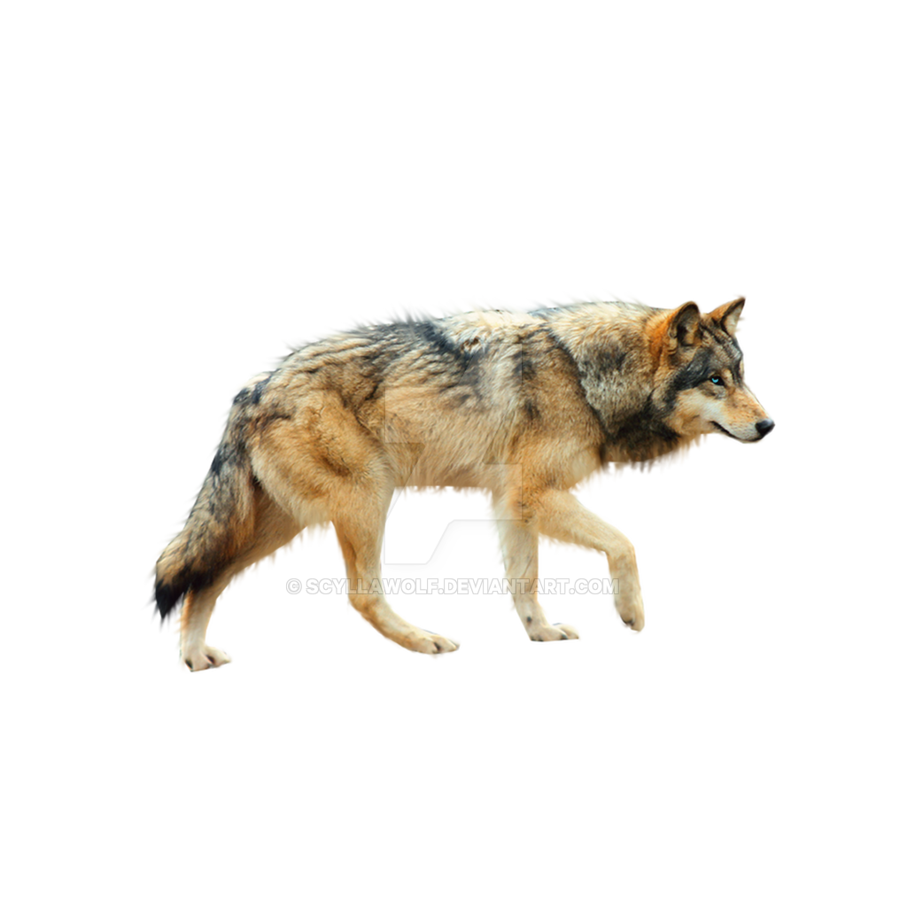 transparent running wolf gif #19450