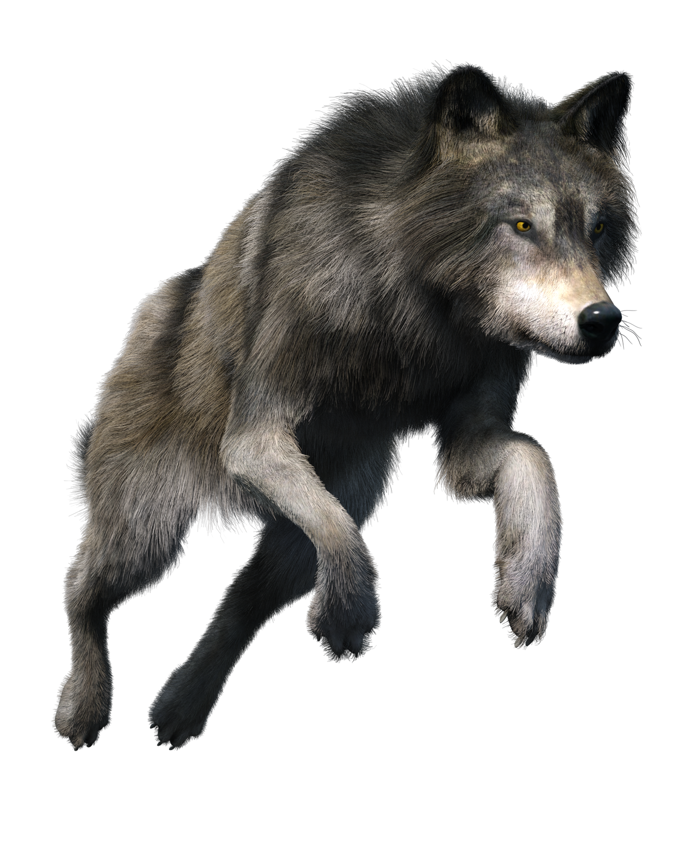 wolf png transparent images #19482